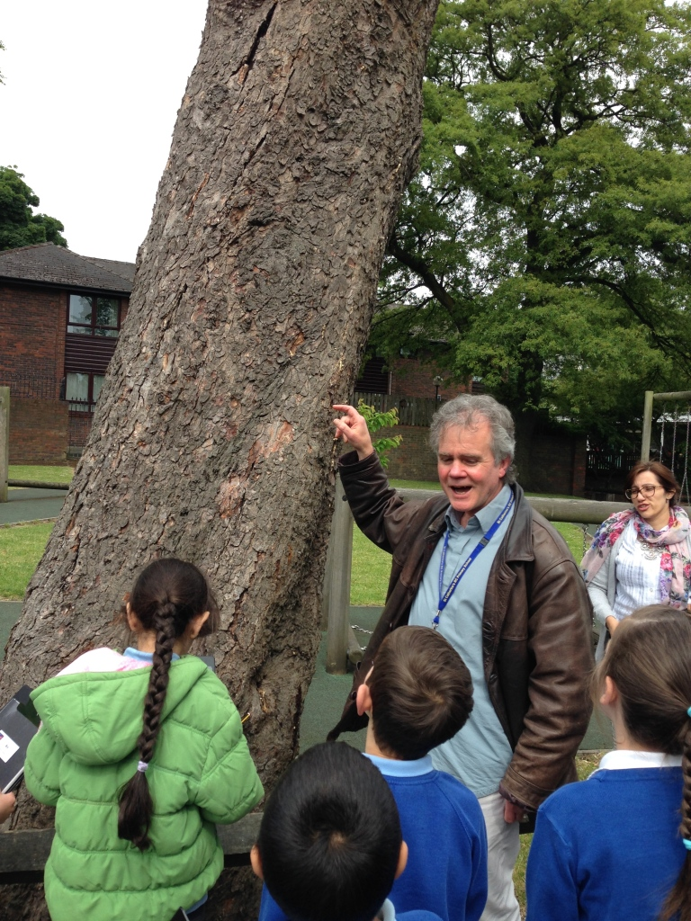Keith Barrett by chestnut tree for sculpture, St Catherine's Primary